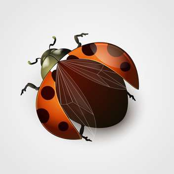 Vector illustration of red ladybug with black spots on white background - Free vector #125738