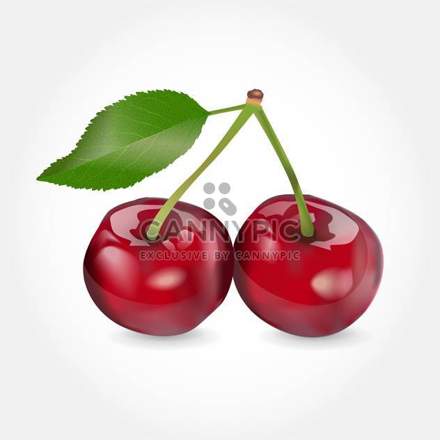 Vector illustration of red ripe cherry on white background - Free vector #126278