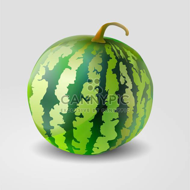 Vector illustration of green watermelon on grey background - Free vector #127338