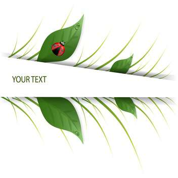 green leaves design with ladybug on white background and text place - vector gratuit #127928