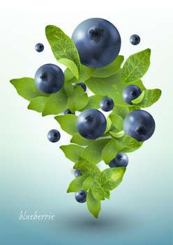 ripe summer blueberries with mint leaves - vector gratuit #130488
