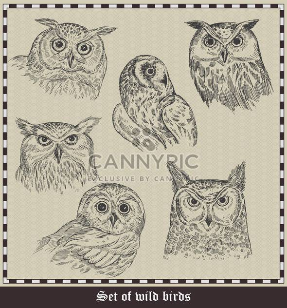 set of hand drawn owls birds illustration - Free vector #135048