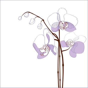 elegance branch of purple orchids on white background with text place - vector gratuit #127398