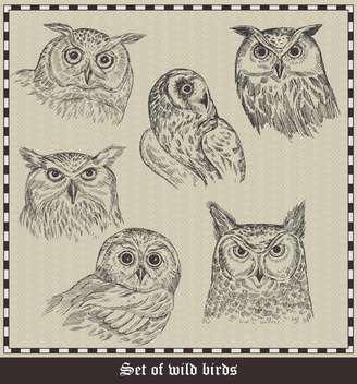set of hand drawn owls birds illustration - vector gratuit #135048